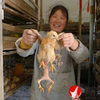 Poultry farm rears a four-legged, two-bottomed chicken you can weigh in cats