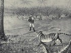 How I Killed The Tiger – Being An Account of My Encounter With A Royal Bengal Tiger: pictures from a 1902 hunt
