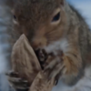 When squirrels attacks: critter jumps on delivery drivers head