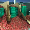 $2.3 million worth of illegal marijuana pizza topping seized in California